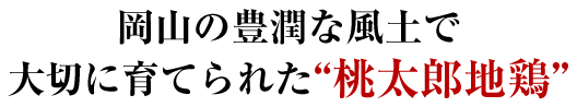 """岡山の豊潤な風土で 大切に育てられた""""桃太郎地鶏"""""""
